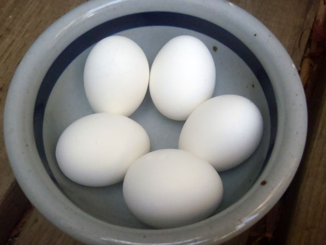 Hard Boiled Eggs in a blue and white bowl