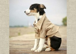 Undercover Doggy Trench