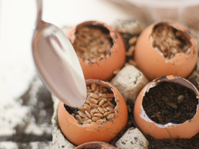 DIY Holiday: Wheat Grass Eggs