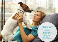 How to Pick a Pet Sitter – A Checklist