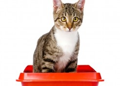 How to Find the Right Litter For Your Cat