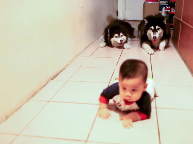 dogs-imitating-baby