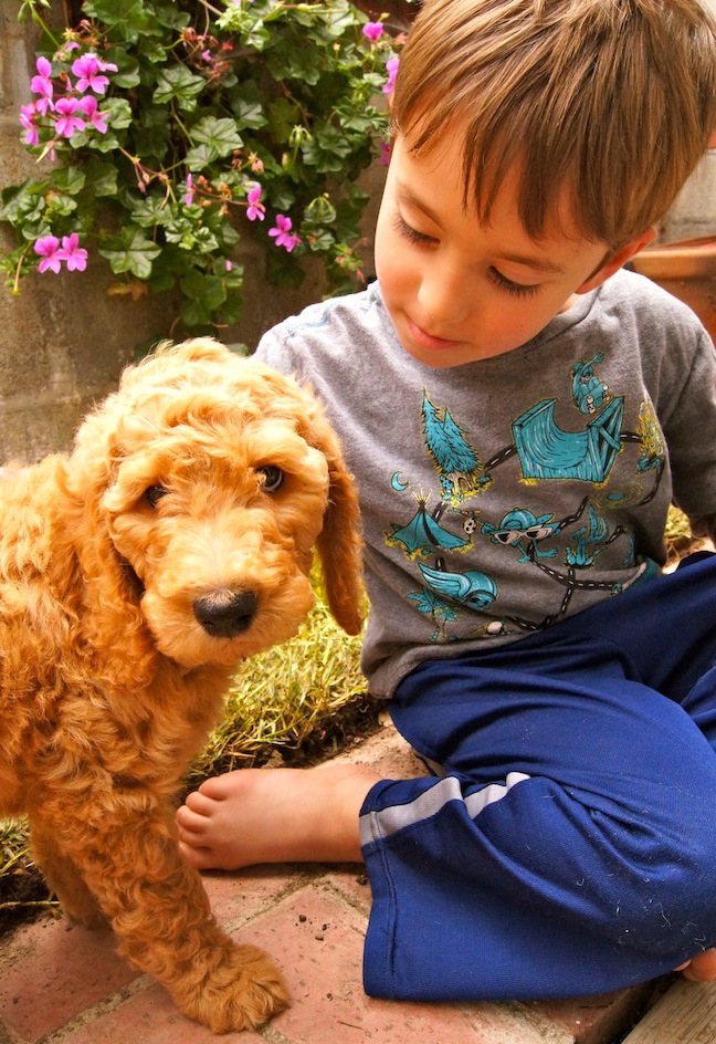 What Can Your Puppy Teach Your Kids? | Momtastic