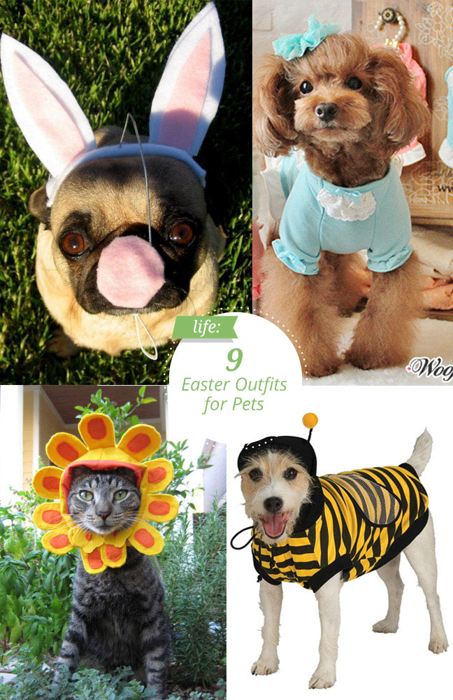 easter-costumes-for-pets