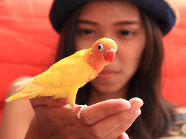 good-pets-for-kids-birds