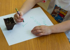 Giving Kids a Green Thumb: Watching the Seedlings Grow!