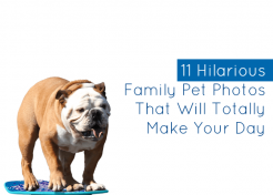 11 Hilarious Family Pet Photos That'll Totally Make Your Day