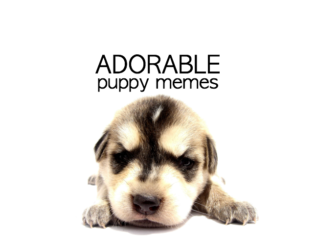 Adorable Puppy Memes on Momtastic with so many cute puppies and LOLs