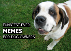 Funniest-Ever Memes for Dog Owners