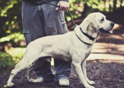 6 Secrets to Getting Your Kids to Help with the Dog