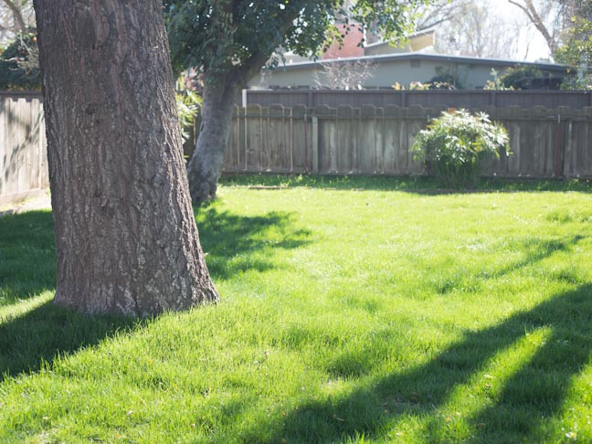 yard-lawn-tree-fence