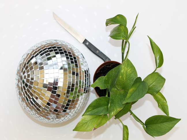 disco ball knife plant