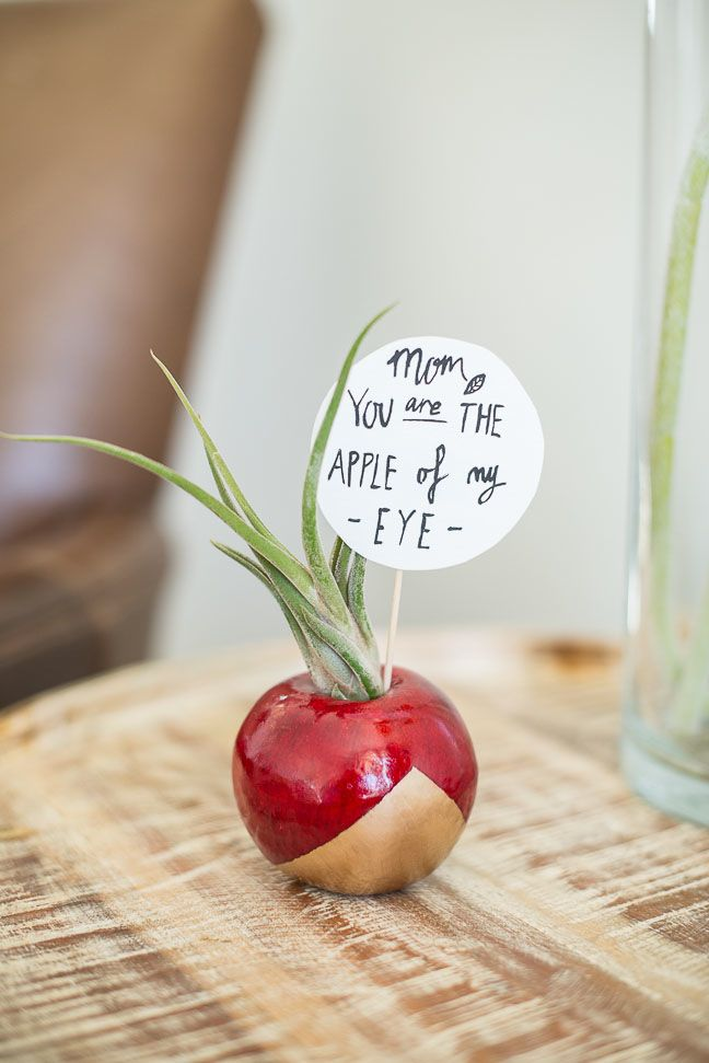 DIY Air Plant Gift For Mothers Day