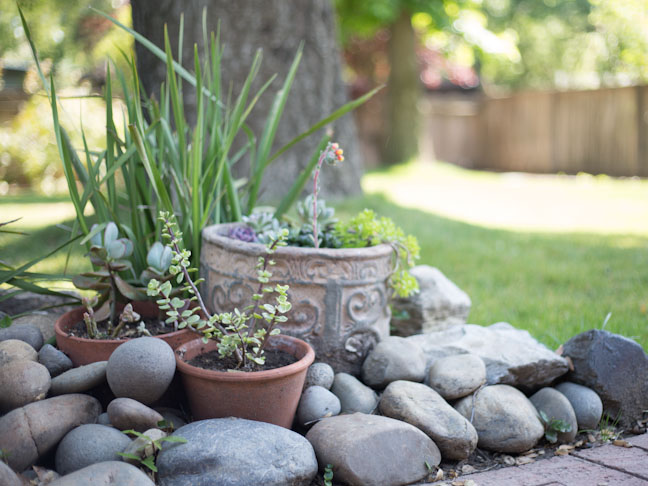 backyard-succulents-platers