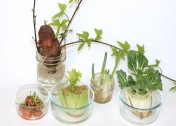 Kitchen Scrap Plants Experiment: 13 Easiest Fruits & Vegetables to Regrow