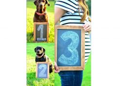 12 Adorable Ways to Include Your Pet in Your Pregnancy Announcement
