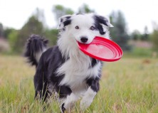 13 Fun Games Kids Can Play with Their Dogs