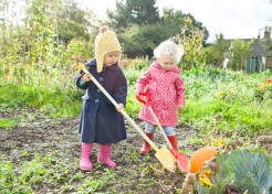 5 Mistakes People Make When Growing Pumpkins at Home