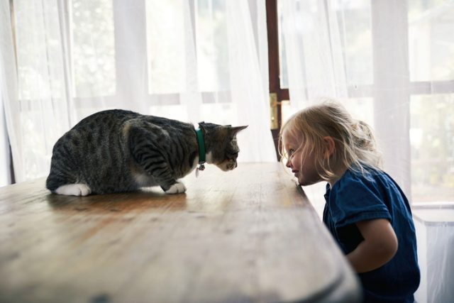 What fostering animals has taught our family