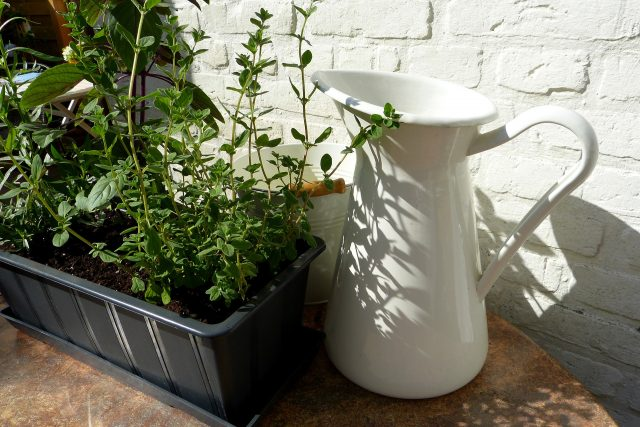 4 Themed Container Gardens to Up Your Gardening Game