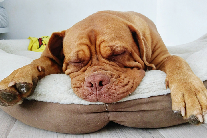 5 pet beds that will not match your home decor