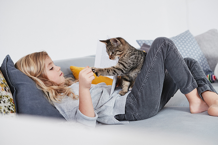 5 essential products for families that have just adopted a cat