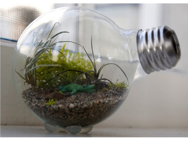 DIY Tiny Terrarium in a Light Bulb