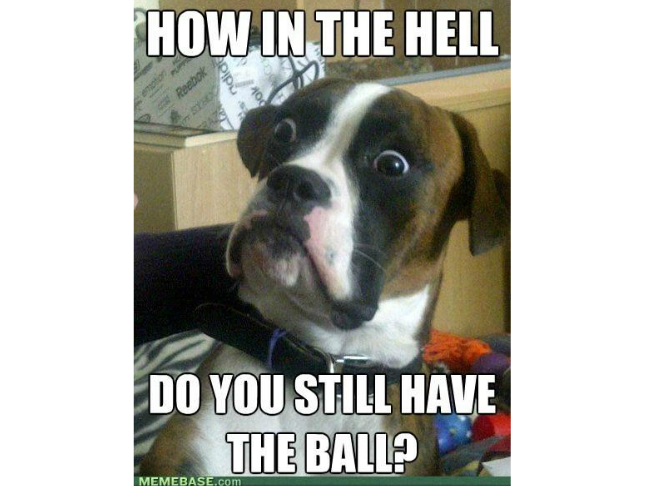 Image of: Christmas Memes Funniest Ever Dog Memes On Momtastic You Still Have The Ball Png 648x486 Memes Dog Vitamin Vitaminha Memes Dog Vitamin Ha Funny Micdonalds Wwwpicsbudcom