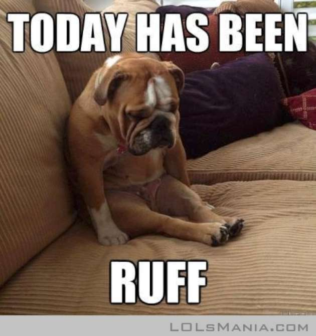 Funny Dog Meme Images : If your pets could talk adorable animal memes to make you