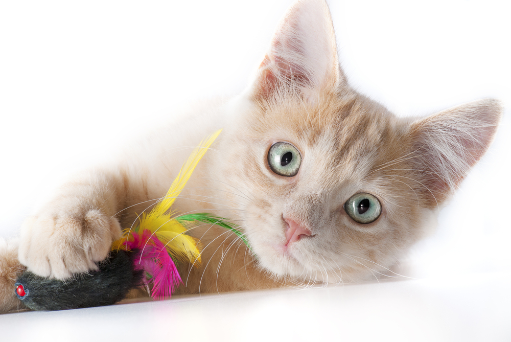 Toys to Hone Your Cat's Natural Hunting Skills